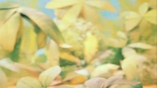 38 попугаев Сезон 1 01 - Животные измеряют рост Удава