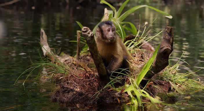Смотреть Амазония: Инструкция по выживанию