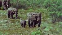 BBC: Дикая Африка Сезон-1 Серия 1