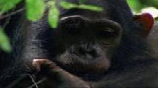 BBC: Дикая Африка Сезон-1 Серия 5