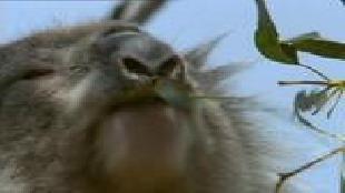 BBC: Дикая Австралазия Сезон-1 Серия 4