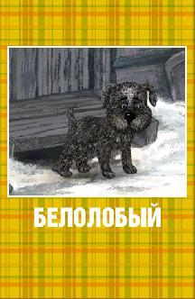 Смотреть Белолобый