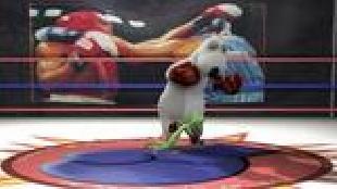 Бернард Сезон-2 Бокс