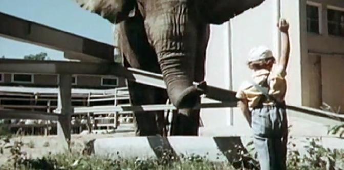Смотреть Боба и слон