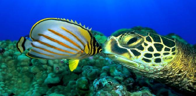 Смотреть Большое путешествие вглубь океанов