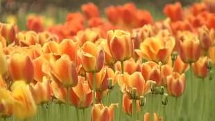 Дачные истории 1 сезон Хранение моркови и луковиц тюльпанов