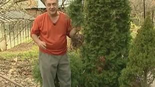Дачные истории 1 сезон Советы начинающим садоводам