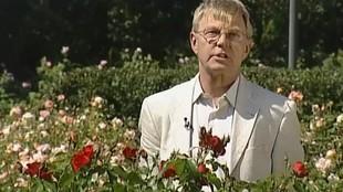 Дачные истории 1 сезон Выращиваем розы