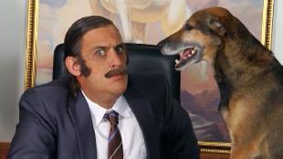 Даёшь молодёжь! Босс Собака в офисе