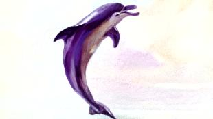 Диакниги Сезон-1 Приключения дельфина Гука