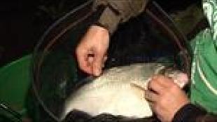 Диалоги о рыбалке Сезон-1 Истра, ночь. Лещ