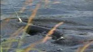 Диалоги о рыбалке Сезон-1 Снасти и способы ужения. Часть 2