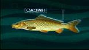Диалоги о рыбалке Сезон-1 Тихая охота. Часть 5