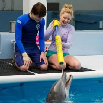 Смотреть «История дельфина 2» не обошлась без Моргана Фримена
