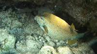 Мир подводной охоты Сезон-1 Фридайвинг. Погружения