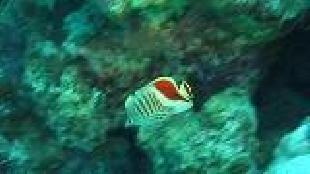 Мир подводной охоты Сезон-1 Фридайвинг в Красном море