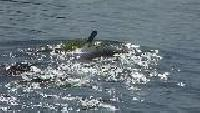 Мир подводной охоты Сезон-1 Кубок мэра 2007