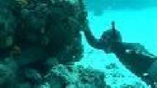 Мир подводной охоты Сезон-1 Мурена
