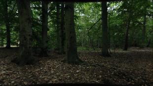 Научно-популярные короткометражки Сезон-1 Камс (на английском языке с русскими субтитрами)