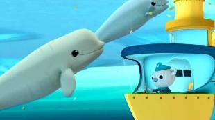 Октонавты Сезон-1 Октонавты и киты-белухи