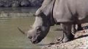 Основной инстинкт (2009) Сезон-1 Экстремальная охота в Африке