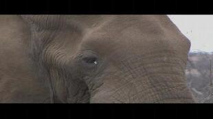Основной инстинкт (2009) Сезон-1 Фотоохота. ЮАР