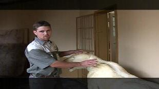 Основной инстинкт (2009) Сезон-1 Охота на зебру в Намибии