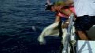 Планета рыбака Сезон-1 Гавайский остров Мауи