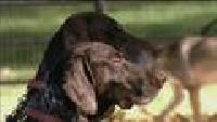 По секрету всему свету (2006) Сезон-1 Собаки