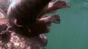 Под водой с... Сезон-1 Чили
