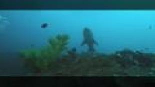 Под водой с... Сезон-1 Ход сардин