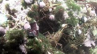 Под водой с... Сезон-1 Макромир Чили