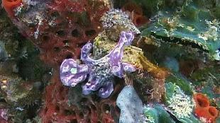 Под водой с... Сезон-1 Ночные Филиппины