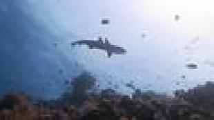 Под водой с... Сезон-1 Природа Палау