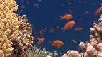 Под водой с... Сезон-1 Рифы