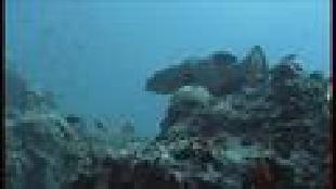 Под водой с... Сезон-1 Сипадан