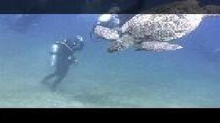 Предельная глубина (2009) Сезон-1 Большие обитатели Красного моря часть 2