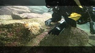 Предельная глубина (2009) Сезон-1 Дайвинг на Кольском полуострове