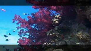 Предельная глубина (2009) Сезон-1 Египет Красное море