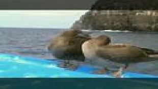 Предельная глубина (2009) Сезон-1 Галапагосские острова
