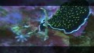 Предельная глубина (2009) Сезон-1 Комодо. Часть 2