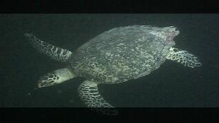 Предельная глубина (2009) Сезон-1 Мальдивы