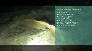 Предельная глубина (2009) Сезон-1 Ночной Дахаб