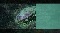 Предельная глубина (2009) Сезон-1 Ночные погружения на Мальдивах Часть 1