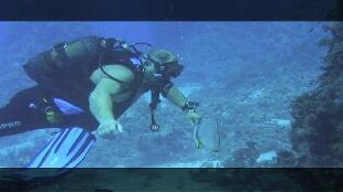 Предельная глубина (2009) Сезон-1 Обитатели рифов Сент-Джонс