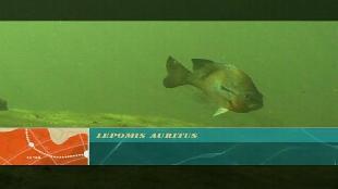 Предельная глубина (2009) Сезон-1 Пещерная система Пикок-Спрингз Часть 2