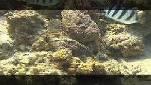 Предельная глубина (2009) Сезон-1 Скорпеновые рыбы