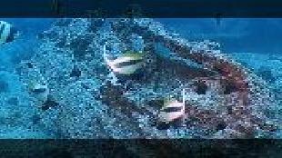 Предельная глубина (2009) Сезон-1 Затонувший паром Салем-экспресс