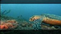 Предельная глубина (2009) Сезон-1 Жизнь мальдивских рифов
