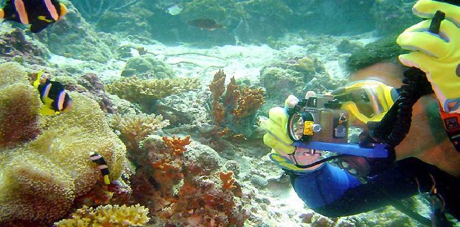Смотреть Relax Ocean. Музыка морских глубин